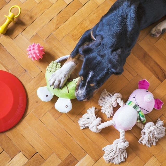dog-toys-5175628_1920